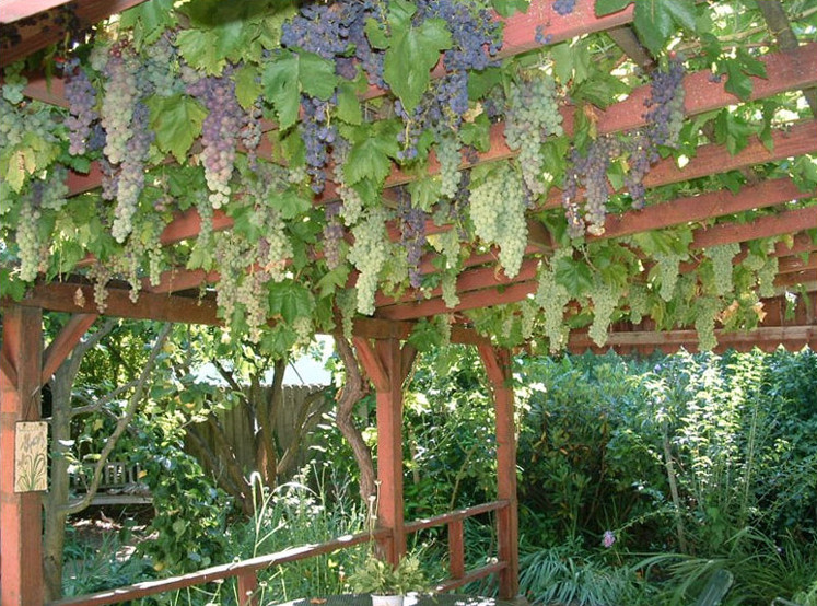A grape or wisteria trellis can provide shade in summer yet the sun shine through in winter!