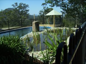 Our Natural Swimming Pond Build:  In The Beginning…