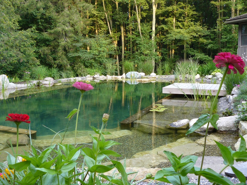 A natural pond designed and built by BioNova