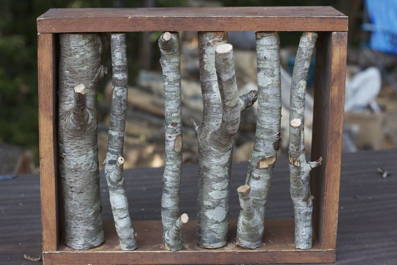 DIY Branch Coat Rack