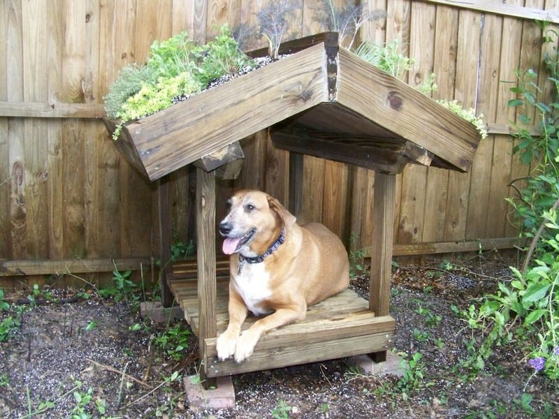DIY Green Roof Dog Veranda