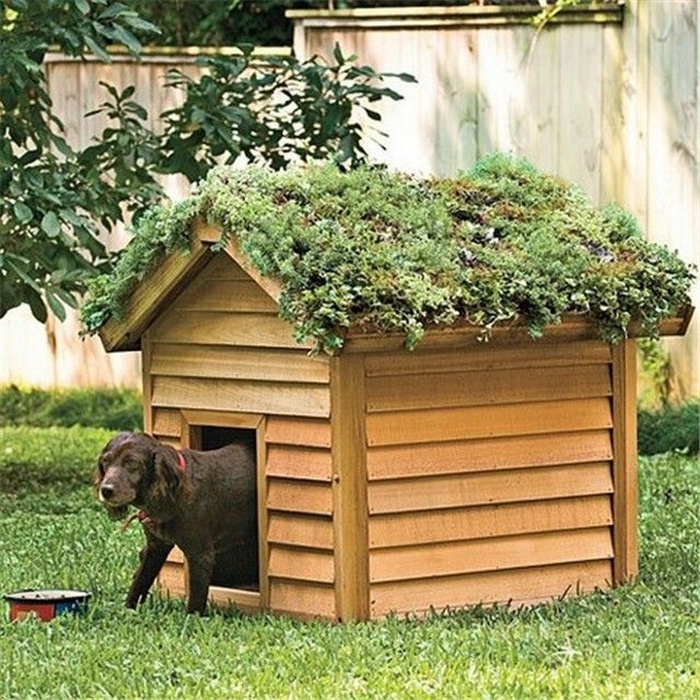 Diy Green Roof Dog Veranda Your Projects Obn