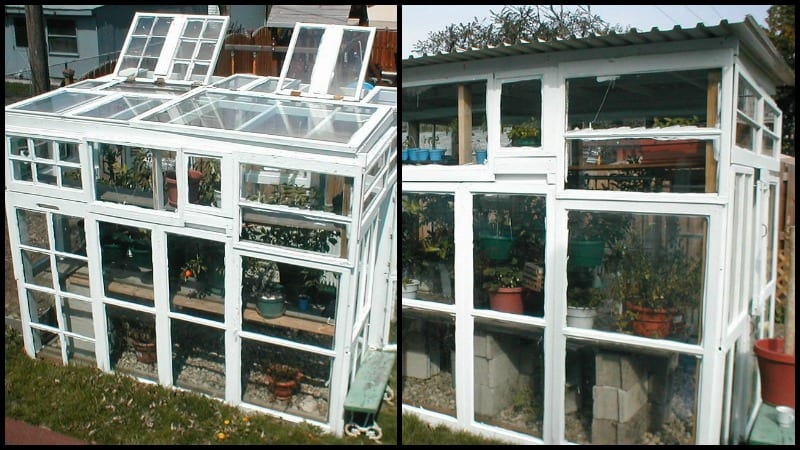 GreenhouseFromOldWindows