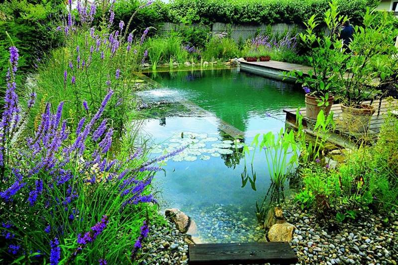 Welcome to the world of natural swimming ponds!