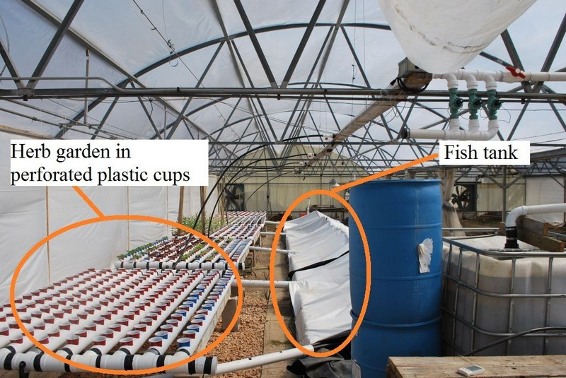 Easy-build, gravity-based, PVC aquaponic system – Your ...