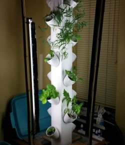 Vertical Aquaponic Garden