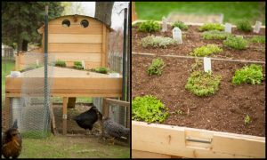 Build a chicken coop with a green roof!