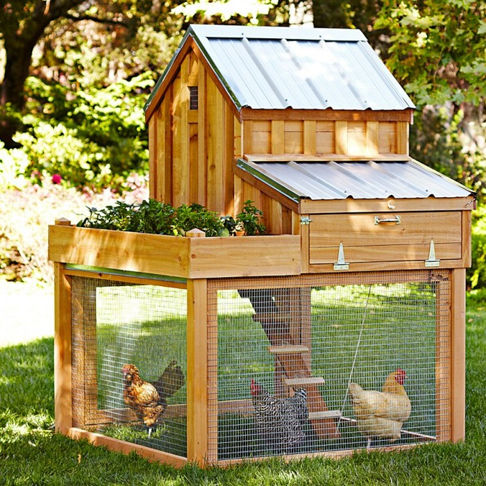 Chicken Coop with Green Roof