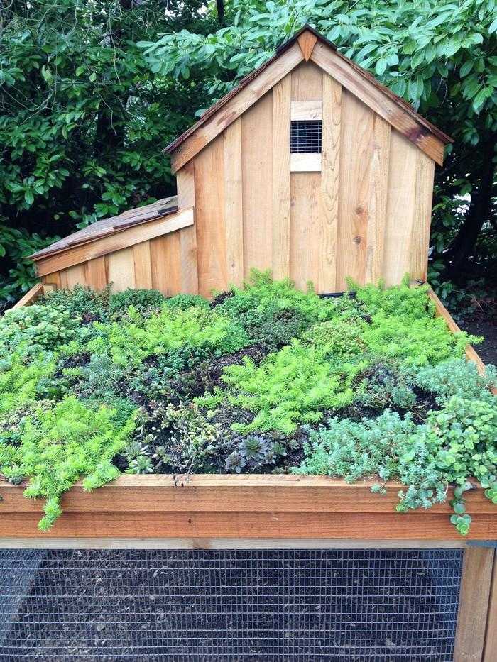 En Coop With Green Roof