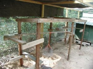 Keep your backyard chickens healthy by building them a jungle gym!