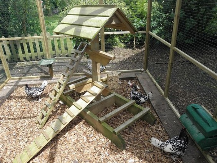 Keep your backyard chickens healthy by building them a for Diy jungle gym ideas