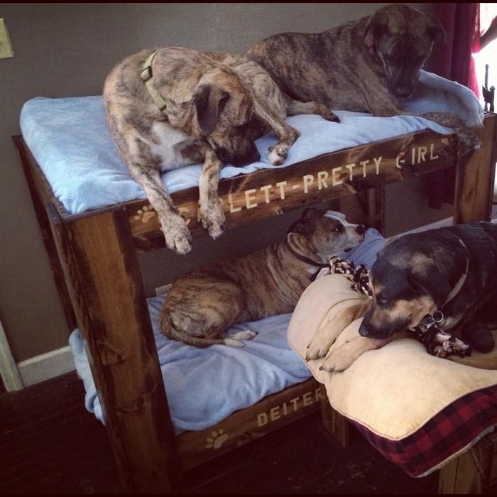Dog Bunk Bed Designs