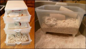 Raise your own mealworms for the chooks!