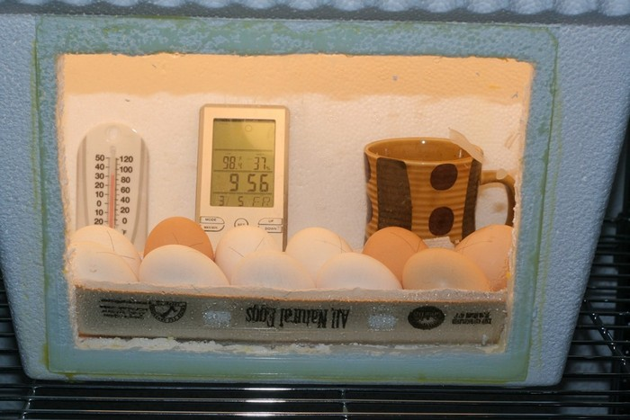 Hatch your own chicken eggs with an inexpensive DIY egg incubator!