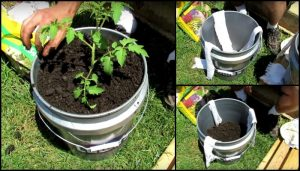 Learn how to make a self-watering tomato planter