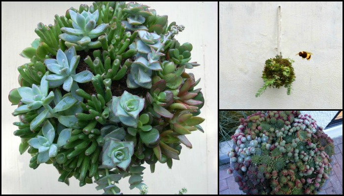 Decorate your home with beautiful succulent balls