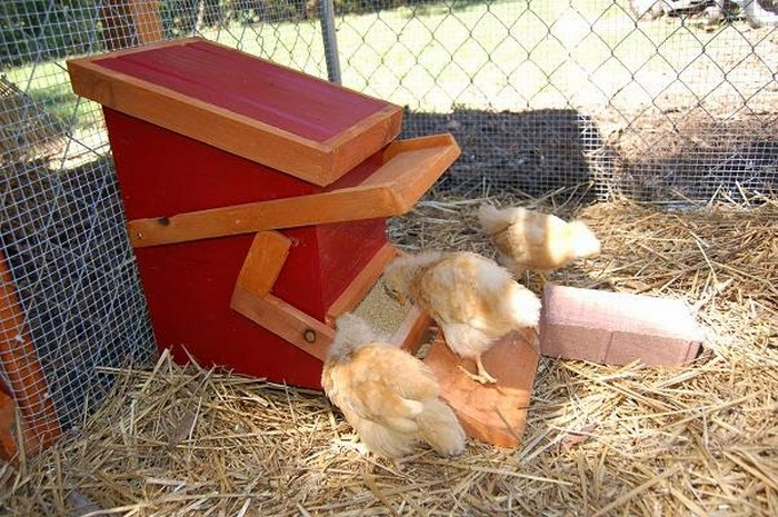 Treadle Chicken Feeder
