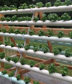 A-Frame Hydroponic System