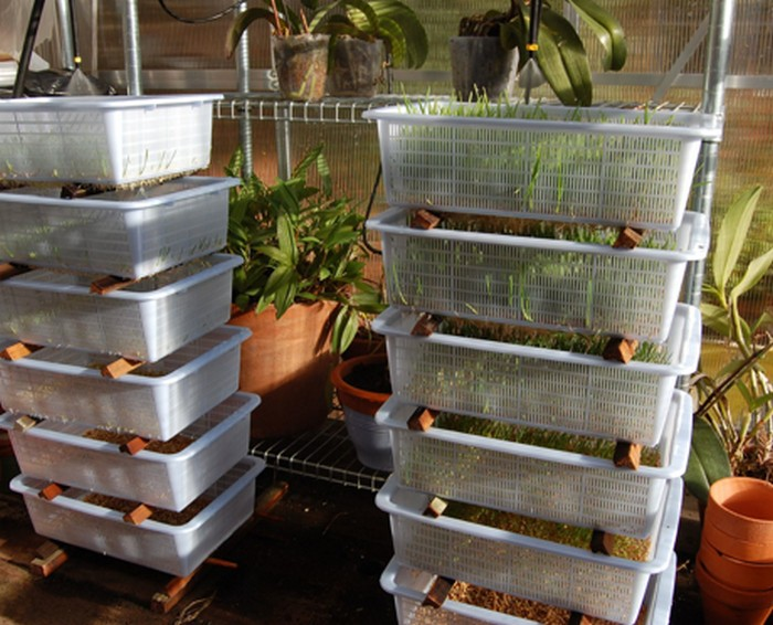 Make Your Own Inexpensive Livestock Fodder Growing System