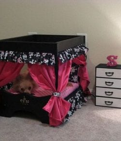 Dog Bedroom