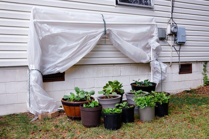 Fold-down greenhouse