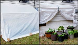 Build a Space-Saving Fold-Down Greenhouse