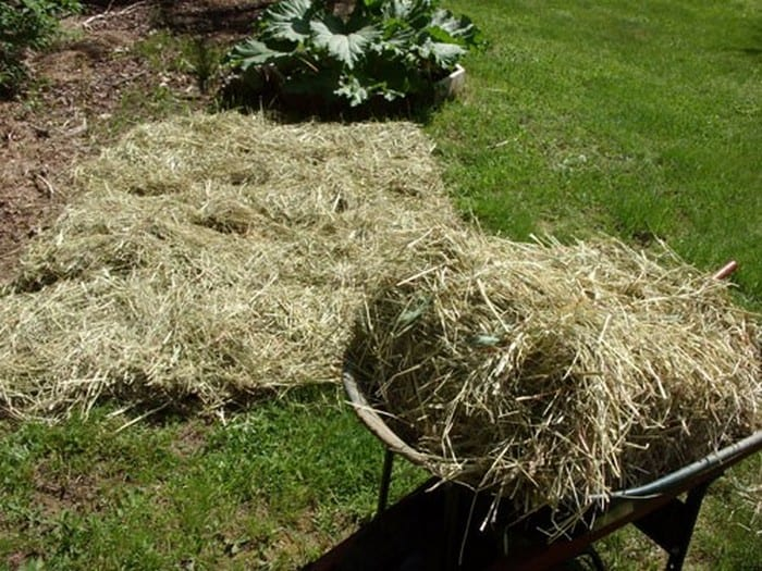 Grow Potatoes In Hay Bales Your Projects Obn