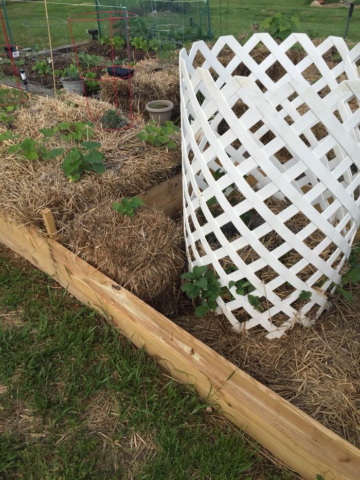 Hay Bale Potato Garden
