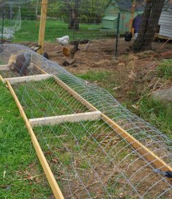 Chicken tunnel