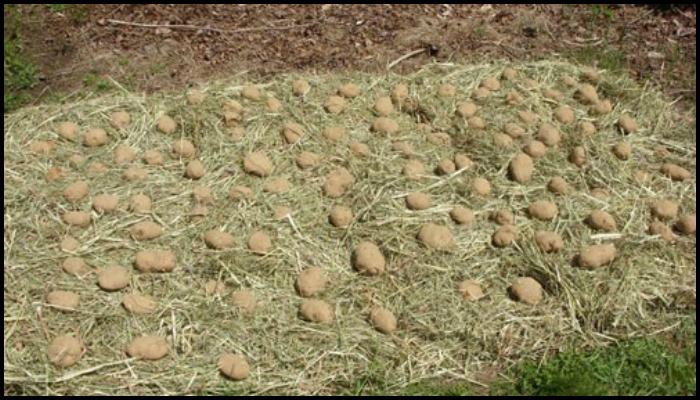 Potato Hay Bale Garden