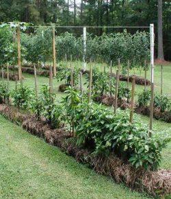 Straw Bale Garden