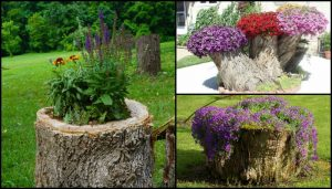 Turn an ugly tree stump into a beautiful planter!