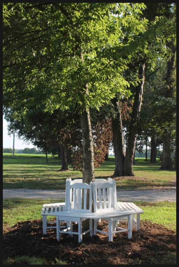 Bench Around a Tree from Kitchen Chairs