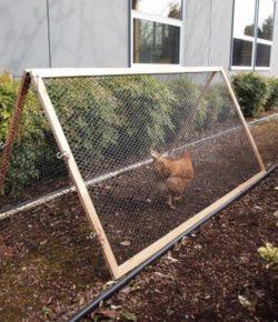 Collapsible Chicken Run