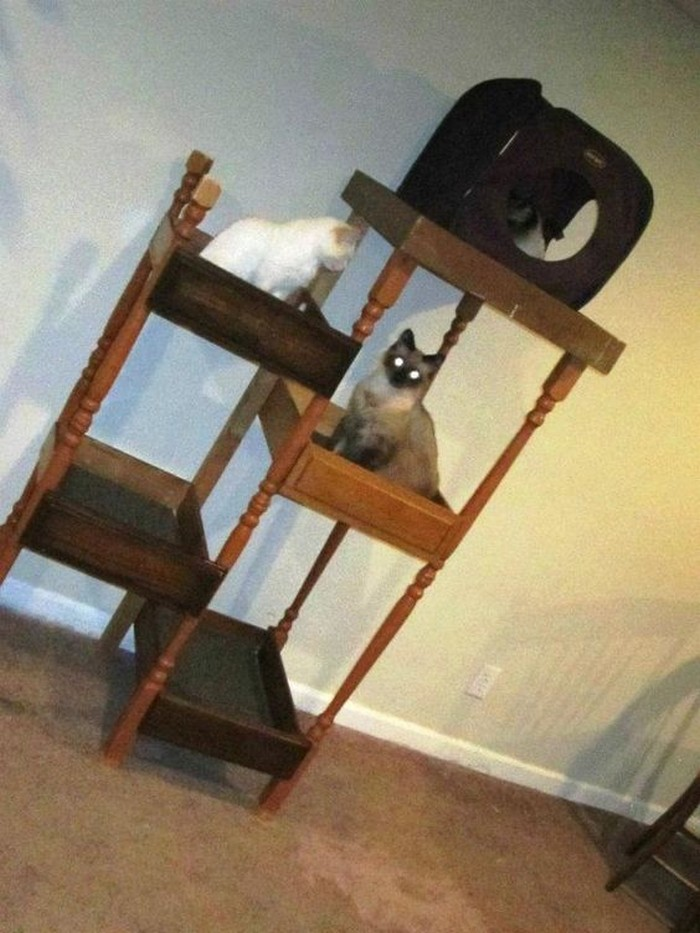 Build your pampered feline a cat tree with old drawers for Build a cat climber