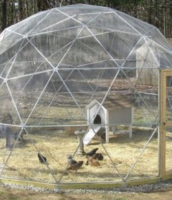 Geodesic Chicken Coop