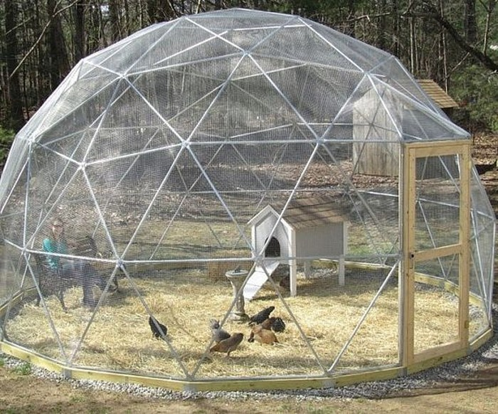 Build your chooks a geodesic chicken tractor!