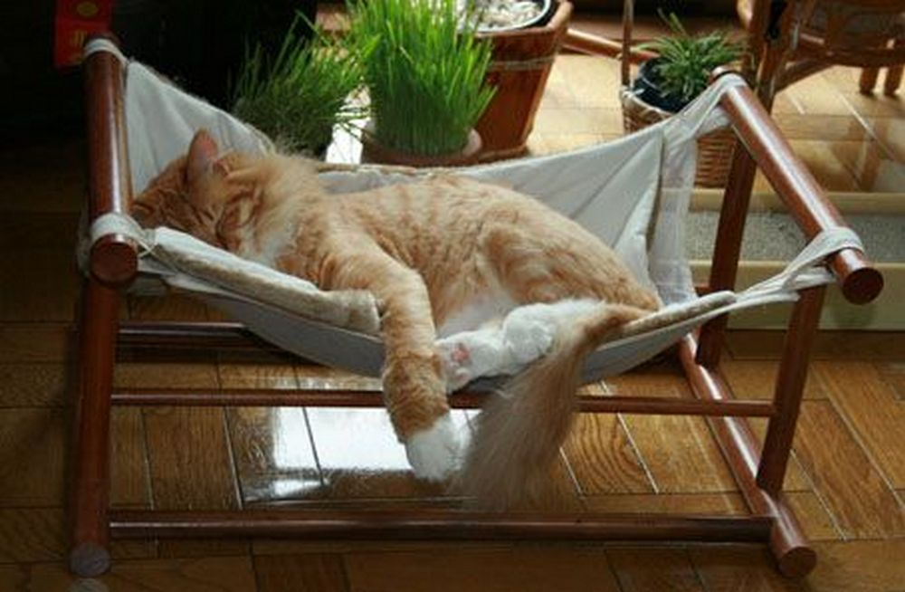 How to Make a Cat Hammock