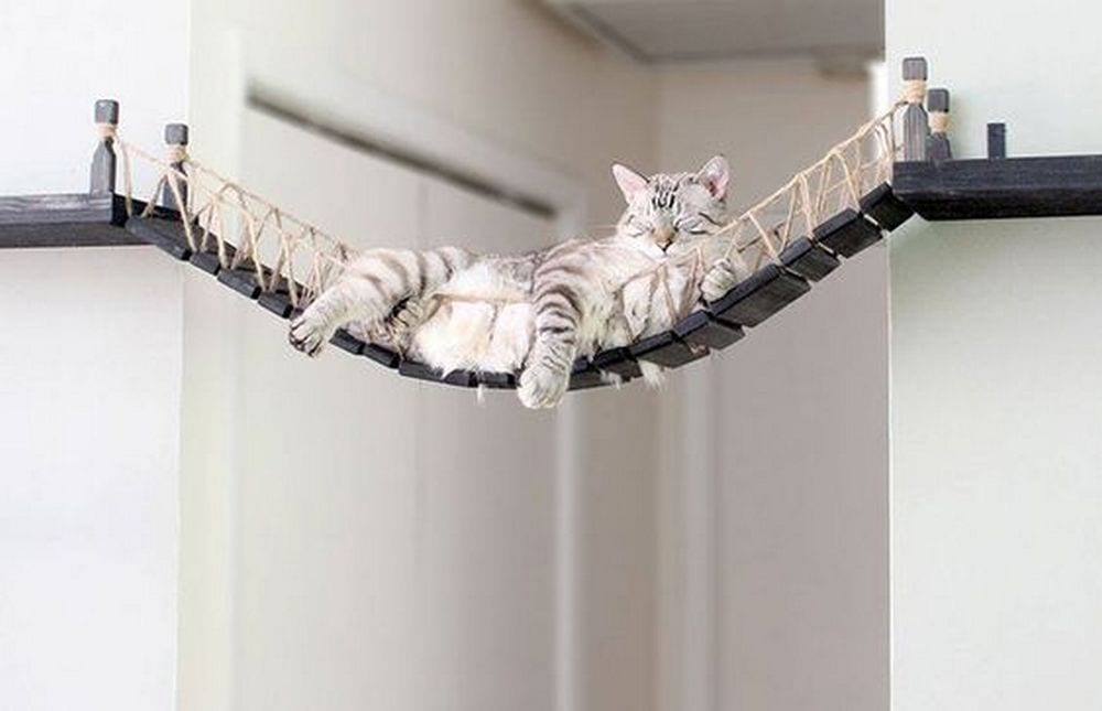 This DIY cat rope bridge is a really nice project for your beloved pet!