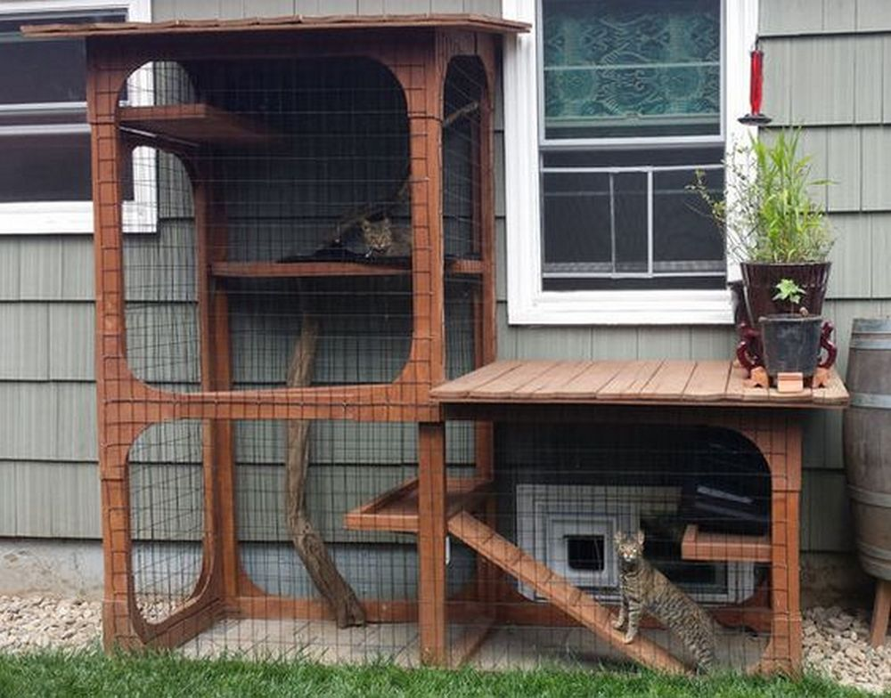 If you're looking for a nice project for your cats, this should be it.