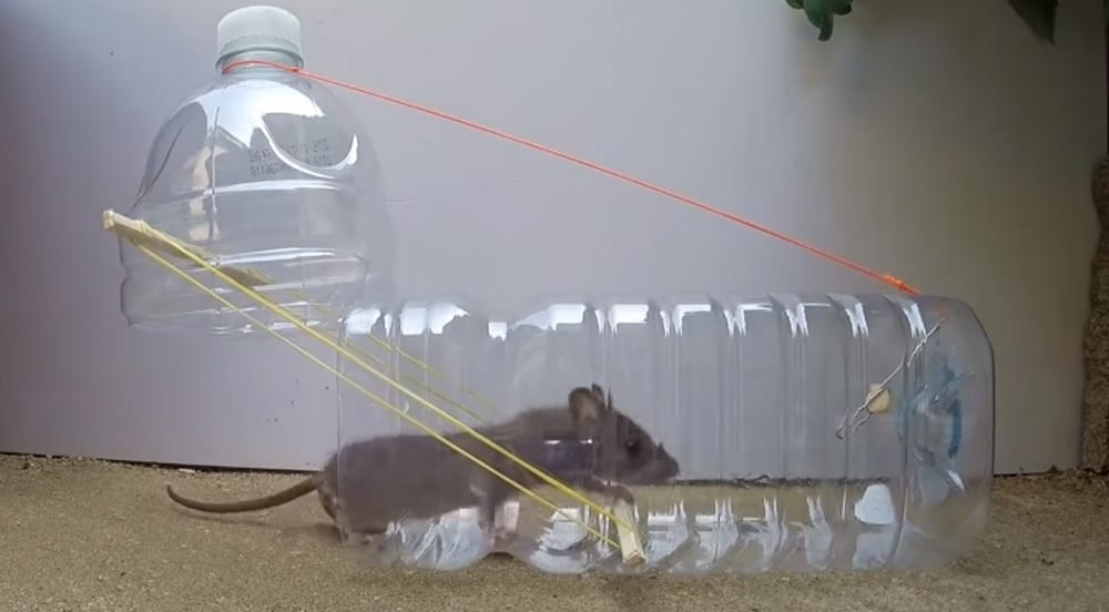 Here's a humane way of getting rid of rats and mice from your house.