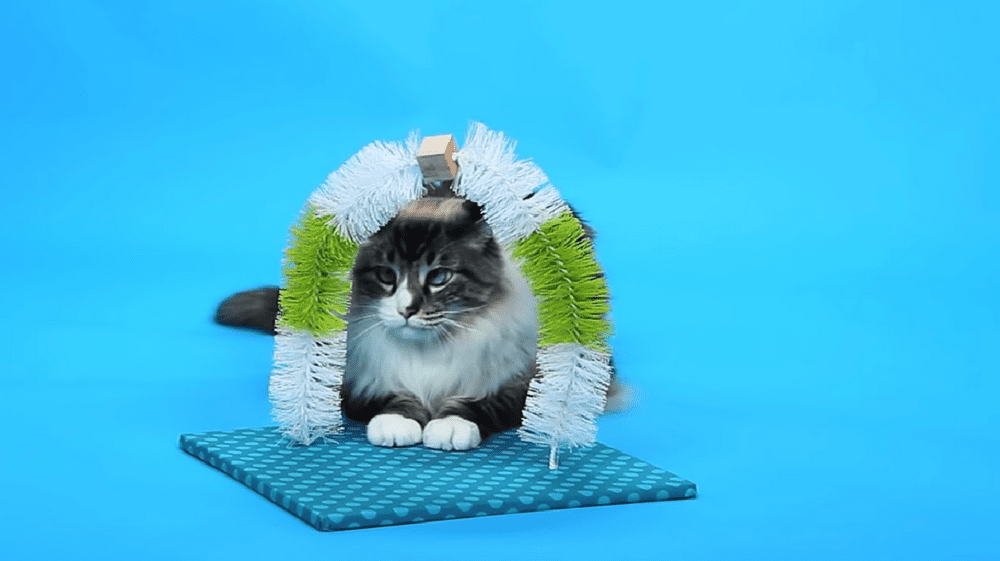 This is an easy and inexpensive project that your cat will surely love!
