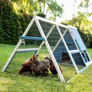 How to Build an A-Frame Chicken Coop