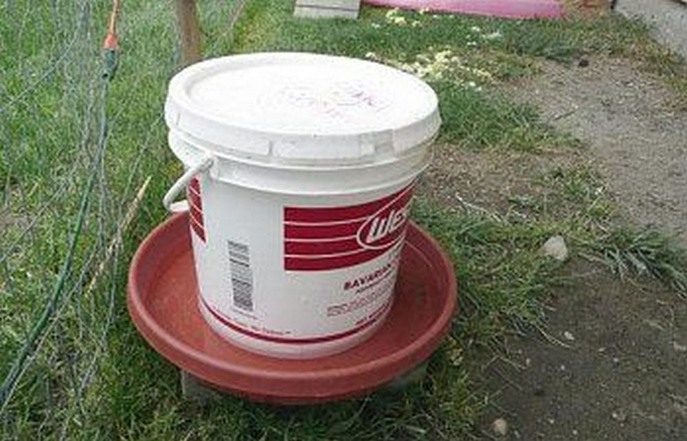 Why buy a chicken feeder when you can DIY your own out of a 5-gallon bucket?